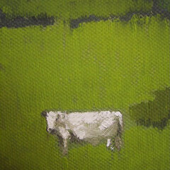 Small White Cow
